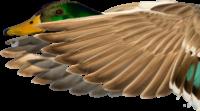 duck-heading-base